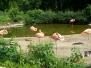 Wizyta w Zoo - Ostrava 13.07.2014